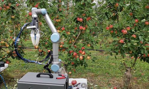 The autonomous apple-harvesting robot.